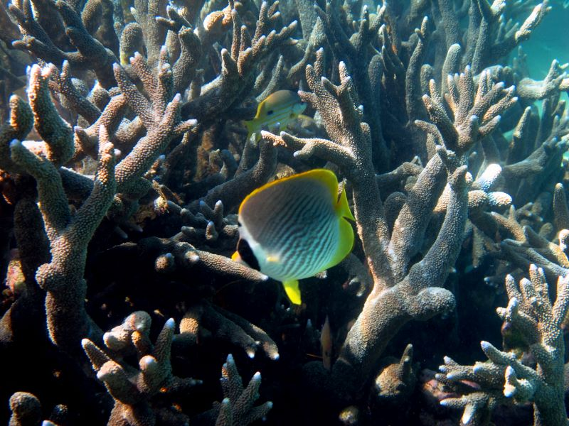 Rafa koralowa w Australii Zachodniej - foto Piotr Wlodarczak