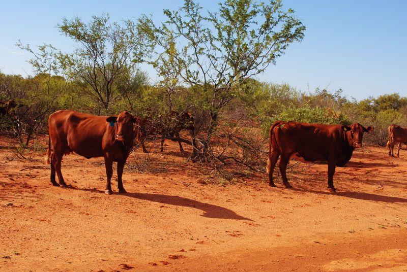 Na outbacku - foto Piotr Włódarczak