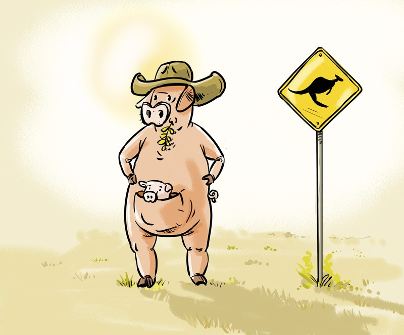 Australia - swinia - grafika nadeslana przez Autora tekstu